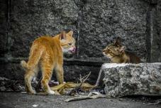 流浪貓家貓「動人一刻」攝影比賽︰最動人心大獎