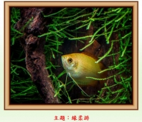 4B班孫以諾同學在 「花鳥蟲魚攝影比賽2014」 「魚樂」項目中榮獲青少年組【亞軍】